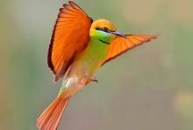 CHIRPING BIRDS / by Dinesh Rajput