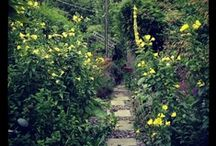 come into the garden... / gardens, flowers and outside spaces