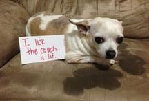 Dog Shaming / by Angie Miller