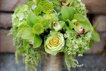 Wedding Colors || Greens / by Lisa Taylor Sweet Dreams Weddings