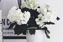 • Bloom •