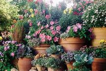 Gardening & Landscapes / by Tina Hahn