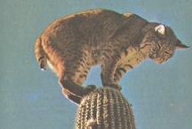 Djur. / djur är bäst / by Ida Aronson