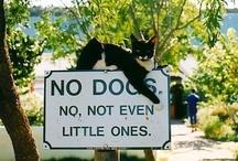 Cats  =^.^= / by Teri Hildebrandt Gehin