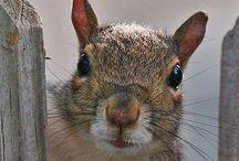 feelin' squirrely