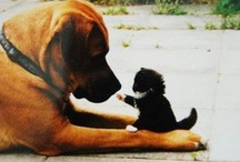 Dogs ... and Cats / If dogs and cats can figure it out, one would think people could negotiate their differences as well.