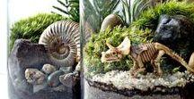 02 ♦ Plener w Słoiku / Las w słoiku, terrarium, mini-garden...