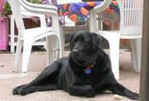 Our Black Lab mixes, Abby and Lexie / by Bobbie Smith