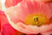 Flores / by Anri Seki