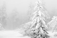 winter / by Andrea Michele