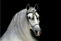 Equine  / A reminder that I will one day be the owner of a horse again. / by Mitzy Gemmill