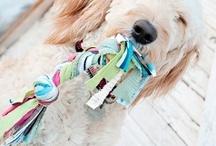 For dogs - Pour les chiens / www.pasbetes.com
