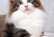 Captivating Kitties / by Judith Flinn