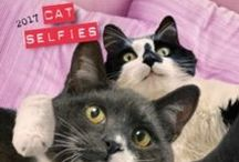 Weird and Wonderful: Cats / A collection of weird, wonderful and all things cat related! For the cat lovers, obviously.