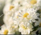 Flowers, gardens, wildlife