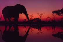 elephants and giraffes / by Susan Krall