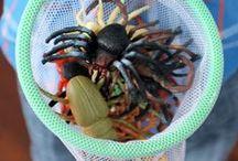 preschool spiders, bugs, worms theme