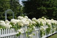 How Does Your Garden Grow? / Beautiful outdoor rooms and garden ideas / by Pam Garcia