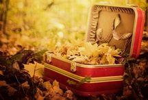 Love Pumpkins and Fall  / by Karen Magee