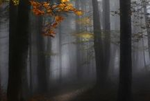 trees my fav / by Marty Cupp
