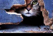 kitties! / All things feline.  / by Austin Ribbing