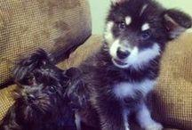 Puppies / Dogs, Puppies, DIY Treats, Games, Toys, Pets, Pet Sitter, Etc.  | safariwithsarah.com