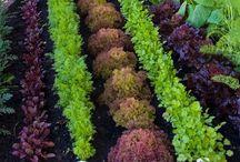 Gardening / by A.J. Downey