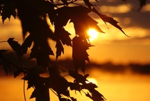 Sunrise & Sunset / Some pictures that i have taken of Sunrises & Sunsets / by Ian Archibald