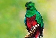 National Birds