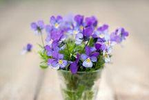 Beauty of Flowers / by Penne Baker