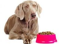 ANIMALS & PETS / How you can help your pets and how they help you.