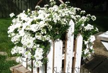 Garden & Outdoor Ideas / by Laura Segert Schoenbeck