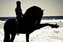 Horses / by Hunter Schmuck