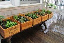 Gardening. :) / by Christine Romano