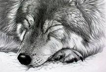 Zeichnungen / Drawings