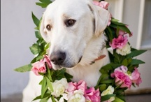 Dogs in Weddings / It is no secret that many of us consider our dogs to be family. So it only makes sense to include them in one of the most important days of your life! More & more couples are continuing to include their pups as ring bearers, escorts, or just plain old companions.