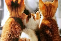 Cats / by Kelsey Annas