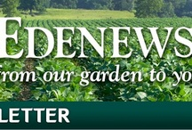 EDENEWS / Edenews is a monthly eNewsletter 'From Our Garden to Yours.' Each issue highlights a different Eden food with fun facts, recipes, and special of the month deals, plus news bites, inspiration, and recommended links. Sign up, and view the current and past issues below. You can also download or email them to a friend. / by Eden Foods