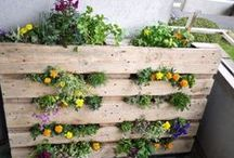 Organic Gardening / by Eden Foods