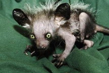Animals ~ Kinda Creepy Critters! / Scary, weird, creepy or unusual . . . These guys are it!