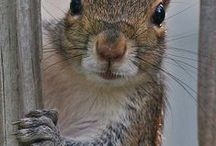 Squirels / by Joane Doyle