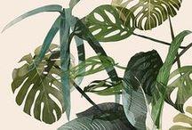 rainforest_t