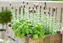 Grow A Garden / by Elaine Pierson