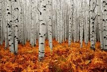Autumn / by carol emma