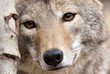 Beautiful Animal Photos / by carol emma