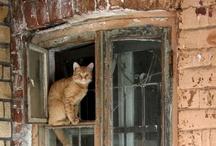Cats in Windows / by carol emma