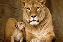 Mothers and Babies / by carol emma