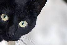 I Adore Black Cats / by carol emma