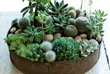 A Home With Plants / by carol emma