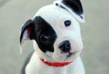 Precious Pups / by carol emma